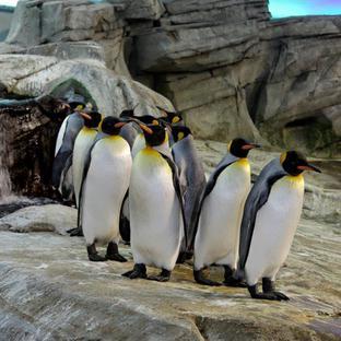 Berliinin eläintarha